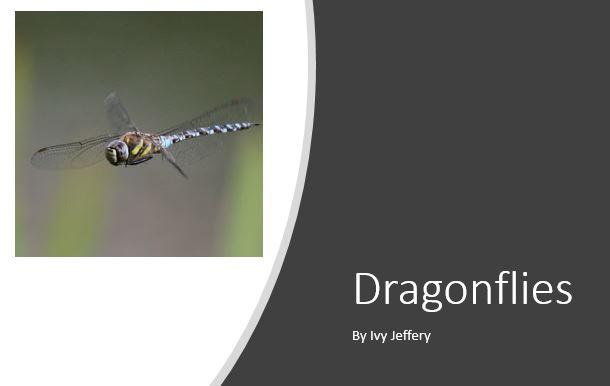 Dragonflies ppt