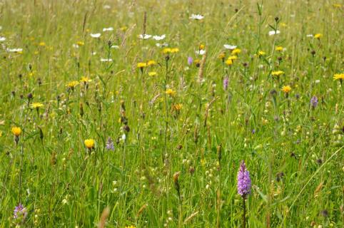 Hay Meadow