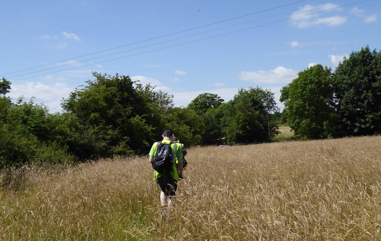 Walk through Field