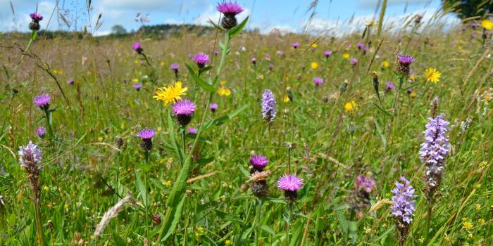 glorious grasslands