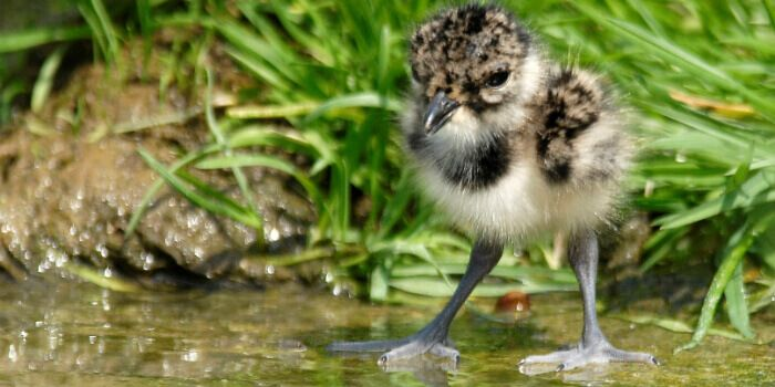 working for waders
