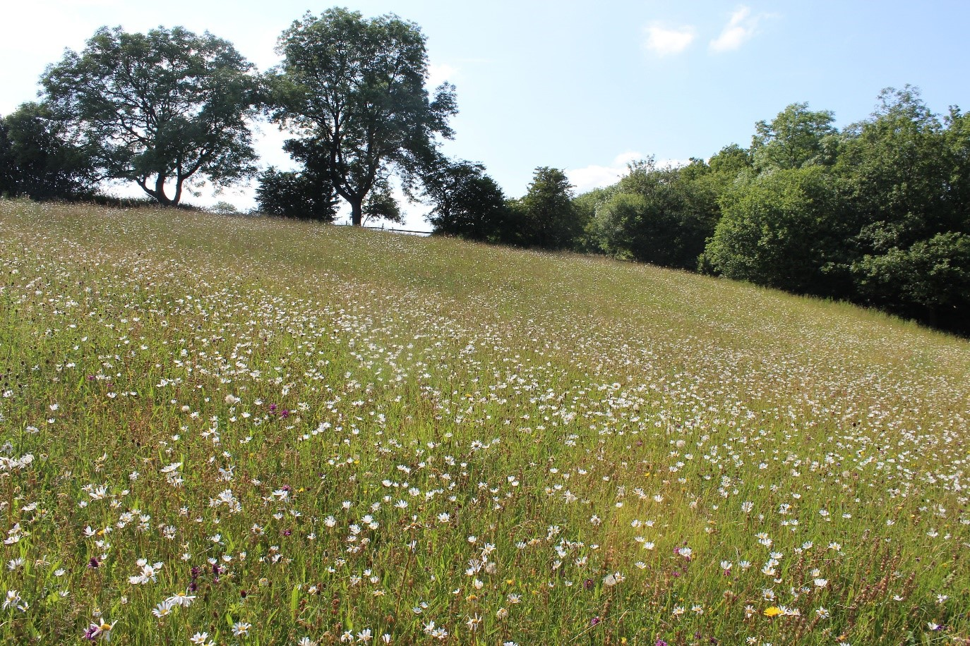 NFN 1 Meadow