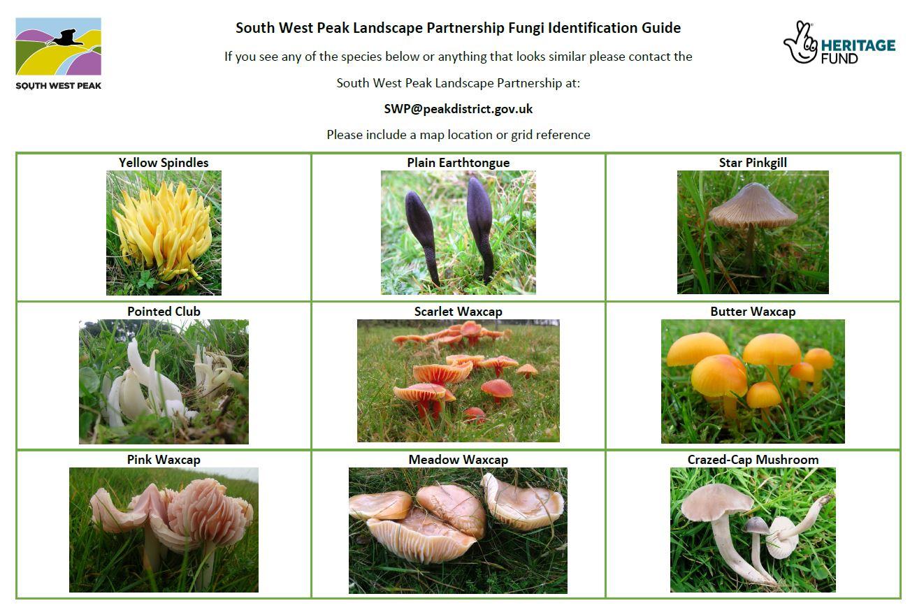 Fungi ID 1